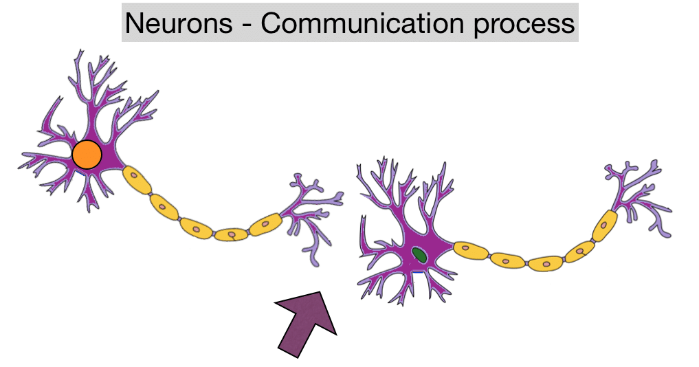 Neurons Communicate Keywords & Suggestions - Neurons Communicate ...
